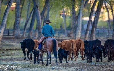 Drought-Stricken Farmers, Ranchers Get Tax Relief from IRS